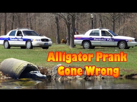 Alligator Prank Gone Wrong