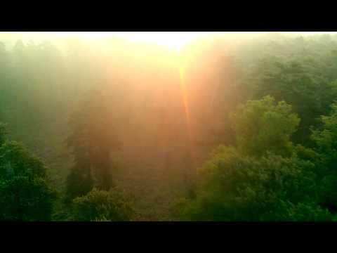 Survol de la forêt de Chambord