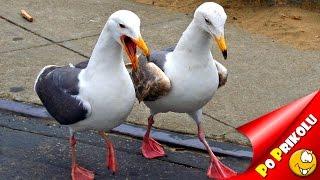 Приколы с птицами (Подборка №011)