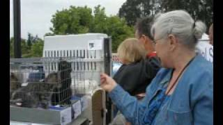 Meet Adoptable Kittens & Cats at the Aptos Farmer's Market!