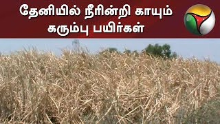 Sugarcane plants gets dried due to lack of water in Theni #Sugarcane
