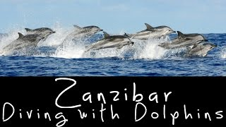 preview picture of video 'GoPro: Diving with Dolphins in Zanzibar, Tanzania'