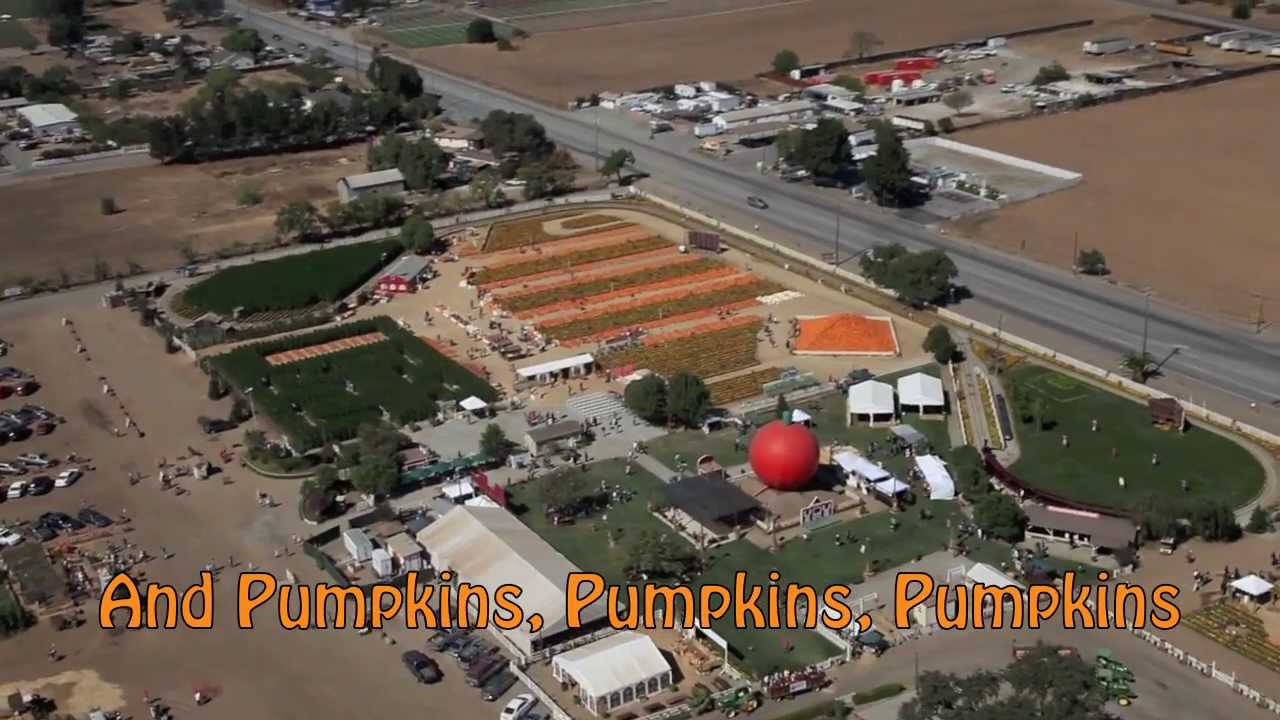 Jumpin jax pumpkin patch by bounce squad in gilroy, ca alignable.