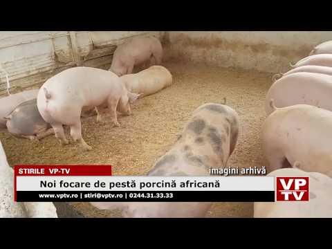 Noi focare de pestă porcină africană