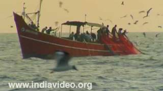 Crows surround a laden fishing boat