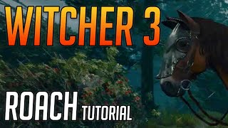 Witcher 3 Roach Upgrades Tutorial