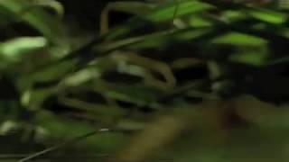 Blue Velvet Blu-ray Trailer