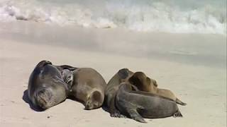 Galapagos Sea Lions relaxing on a beach - Galapagos Islands