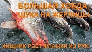 Хищник рвёт флажки из рук! Большая Хобда: щука на жерлицы. Рыбалка в Актюбинской области, Казахстан.