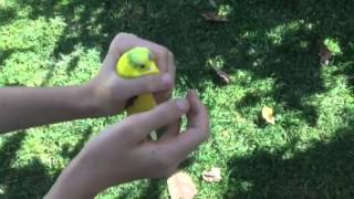 How to put a Bird diaper/Flightsuit on a Budgie