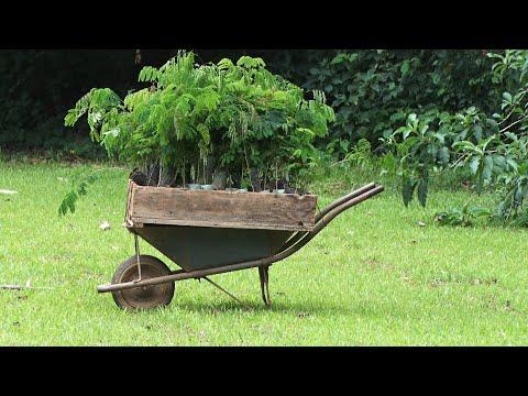 Horto Estadual de Cantagalo tem capacidade para cultivar mais de 200 mil mudas por ano