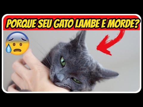 Por Que Meu Gato Lambe e Depois Me Morde? 3 motivos comuns dos gatos