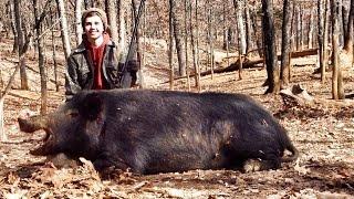 Giant Hog Killed in Missouri