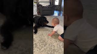 Baby Cant Stop Laughing At Playful Labradoodle