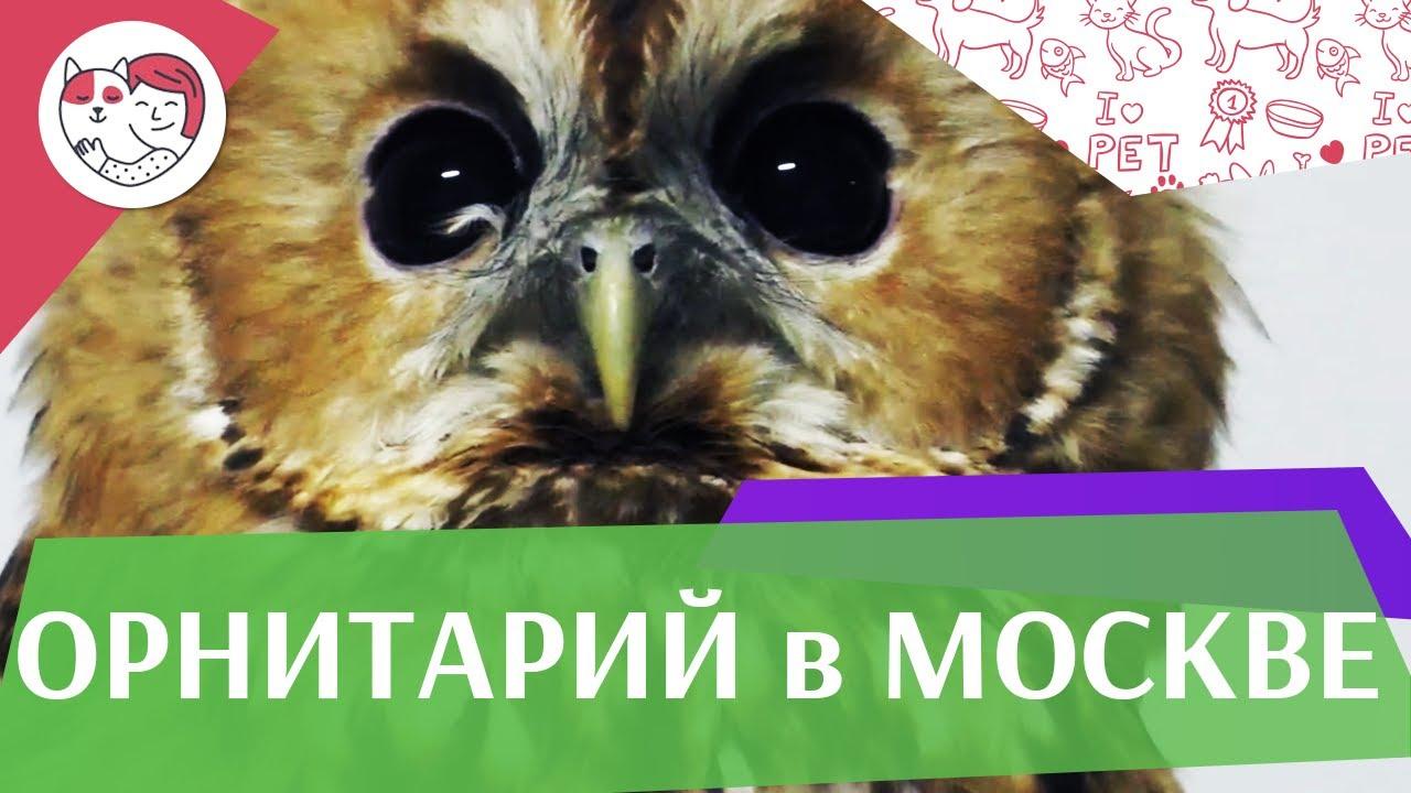 Орнитарий в Москве. Приют для диких птиц. Взять на попечение