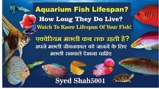 Betta Fish Life Span Free Video Search Site Findclip