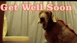 Get well soon video card hilarious send to sick friends