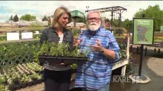 Grow with KARE: Butterfly weed