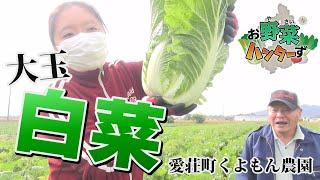 【お野菜ハンターず】大玉ハクサイ 愛荘町くよもん農園