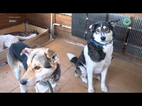 В Ленске массово травят собак: Пострадали даже те животные, которых выгуливали на поводке