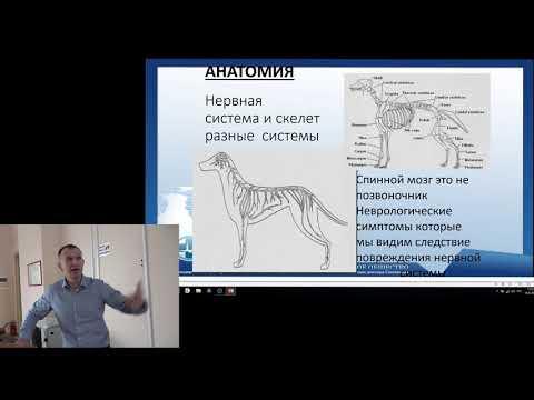 Черепно мозговая травма. Лекция в Санкт Петербургской ветеринарной академии.