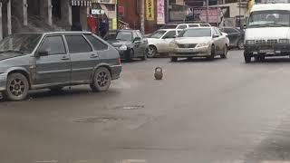 Прикол ДТП в Махачкале ржач