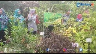 Lahan Kosong di Kelurahan Pakintelan Disulap Jadi Taman Herbal Bedo