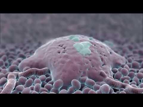 Antibiotikumok a férfiakban a prosztatitis kezelésénél