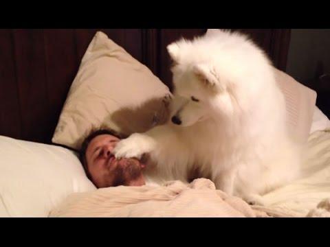 Los Perros Son Las Mejores Alarmas