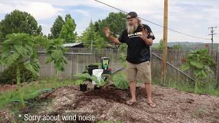 How To Grow Giant Pumpkins!