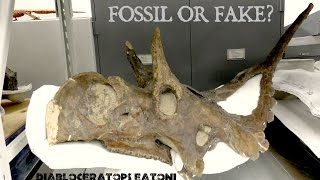Explore behind the scenes in our paleo collections area coolVideo