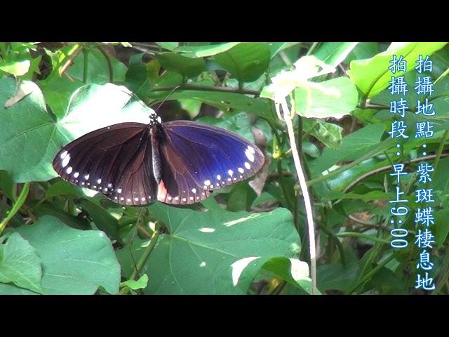 <html> <body> Film for Purple Butterfly2019-11-14 </body> </html>