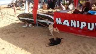 preview picture of video 'Anastasia playing with other dogs on Skhirat beach'