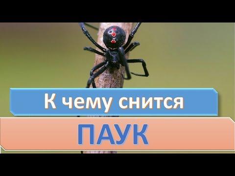 К чему снится паук | СОННИК
