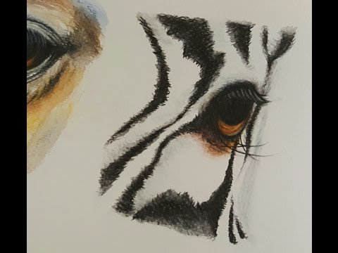 Drawing a zebra eye with Watercolor pencils | how to draw | animal eyes