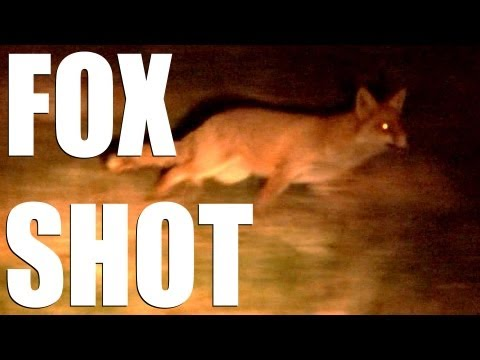Foxshooting with Mark Gilchrist and Roy Lupton