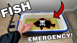 *FISH EMERGENCY* Dying Fish Pet Comes back to LIFE!