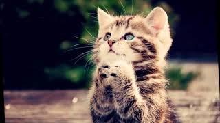 дворовый кот( очень очень грустная песня)