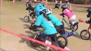 5歳クラス決勝しまなみランニングバイク選手権2016inレインボーハイランドカップ