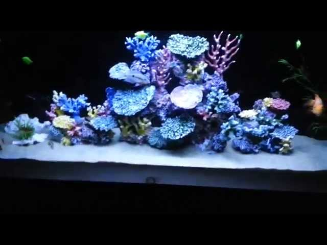 Freshwater Fish Aquarium with Artificial Coral Reef Tank Decorations
