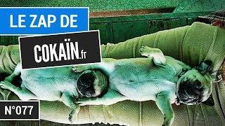 Le Zap de Cokaïn.fr n°077