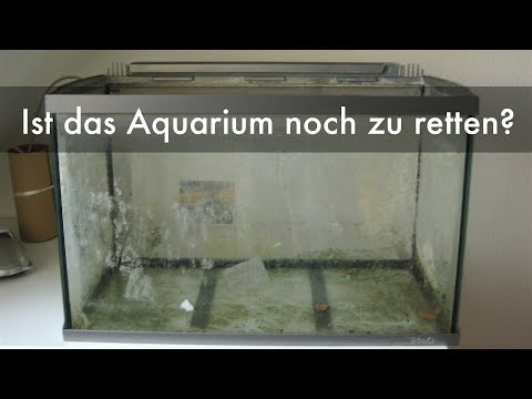 Aquarium vom Sperrmüll neu verkleben | Reseal of an aquarium from trash