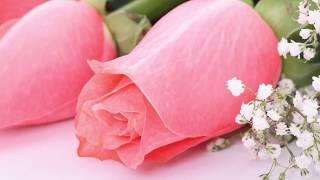 Розовые розы. Цветок моей любви...