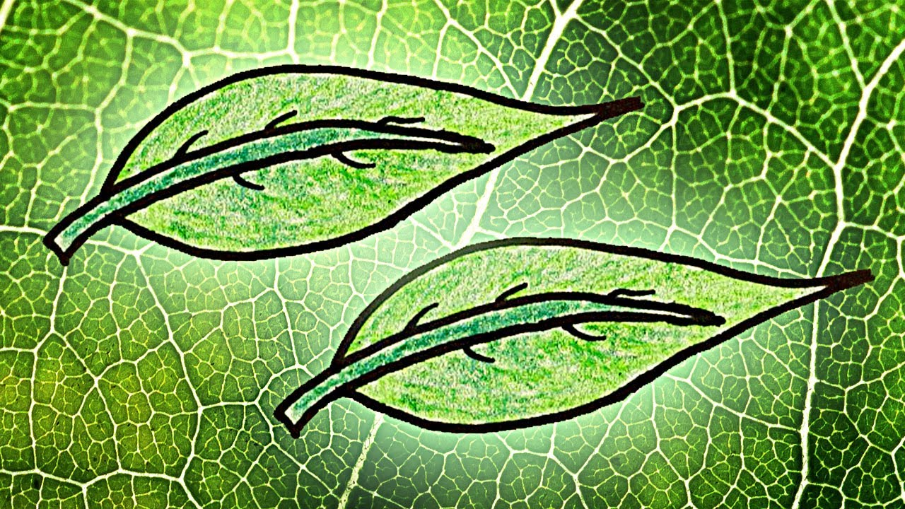 Plants Are Green Because Chlorophyll Is An Evolutionary Champ