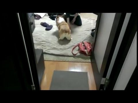 twerking dog Screenshot 2