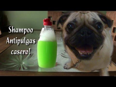 Como Hacer un Shampoo antipulgas Casero
