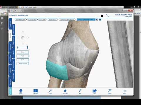 La cirugía de rodilla en la bondad articulación de la rodilla