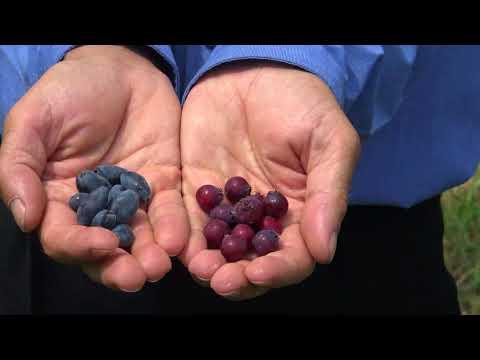Nutriție în zahăr din sânge 8