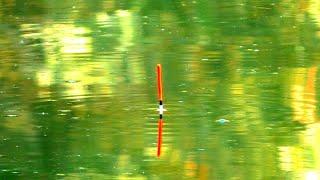 Рыбалка на поплавки