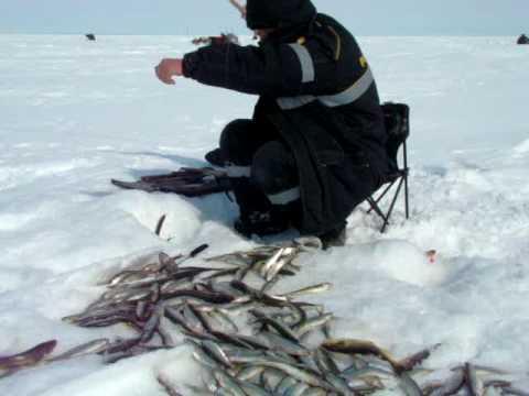 Зимняя рыбалка на Сахалине - ловля корюшки, наваги